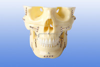 Human dental srugery model ,dental surgery teaching model