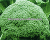 F1 Hybrid Excellent Organic Broccoli Seeds For Sale