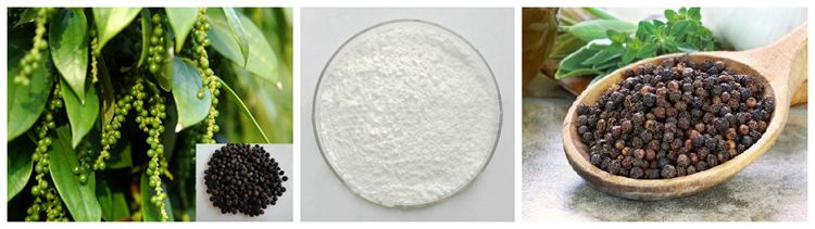 100% Pure Power Supply 95% 98% Piperine Extract Powder
