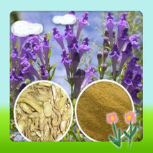 100% Natural Chinese Skullcap extract Baikal Skullcap Extract