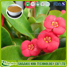 GMP standard China supplier 100% natural high quality flower extract of crown of thorns