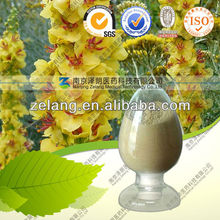 Woolly Mullein extract / Great Mullein Extract