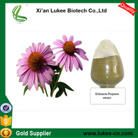 Free Samples Plant Extract 8% Polyphenols Echinacea Extract Powder