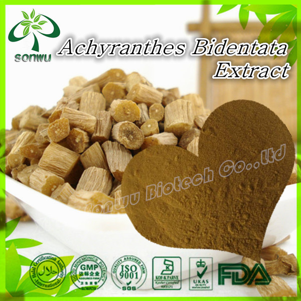 Achyranthes Bidentata Extract powder Achyranthan