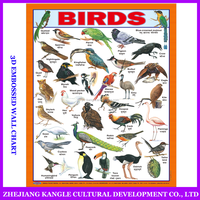 New design English and india language wall chart with birds