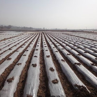 Transparent Mulch Film For Agriculture