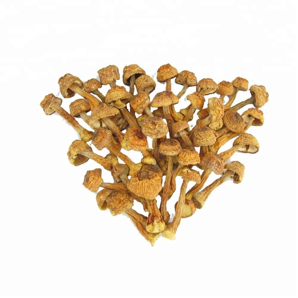 500g Hand-picked 100/% natural agaricus blazei mushroom Ji Song Rong Dried Almond