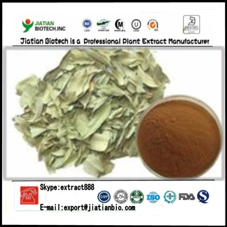 natural Apocynum Venetum Extract Powder Folium Apocyni Veneti Extract