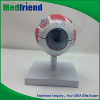 MFM021 Wholesale Products Medical Anatomical Eyeball Model