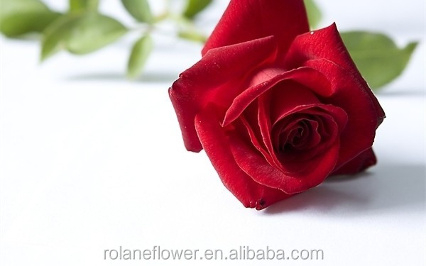 Kunming factory direct sell glass tube rose preserved roses in glass long from yunnan