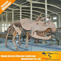 Factory direct sales all kinds of animal skeleton replicas