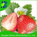 2017 High quality big red strawberry seeds for cultivation