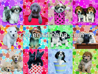 hot animal pictures 3d picture of dogs