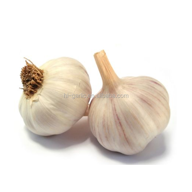 normal white garlic 3p chinese garlic natural garlic