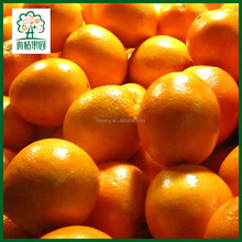 Newest crop fresh calamansi fruit exporters