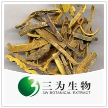 Amur Cork tree Bark Extract
