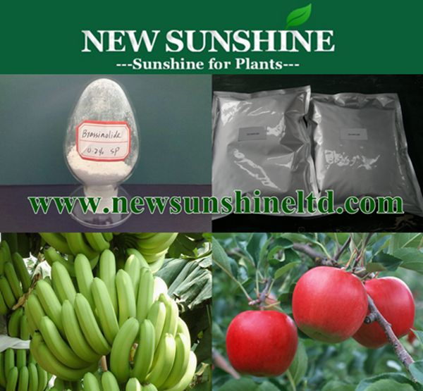Natural Brassinolide for plant growth regulator
