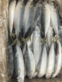 Alibaba Chinese A grade Frozen seafood Pacific mackerel