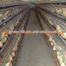chicken breeding cage plant
