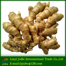 market price for fresh ginger