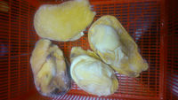 Frozen Saang Shell Meat