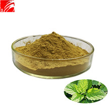 Manufacturer sales Melissa extract lemon balm leaf extract