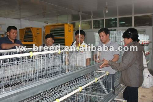 Durable egg cage for egg laying chicken poultry farm (specialized production and design)