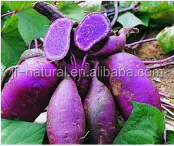 natural Purple Sweet Potato Extract 8% manufacture ISO, GMP, HACCP, KOSHER, HALAL certificated