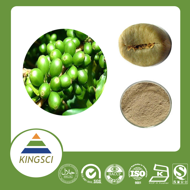 GMP Certified Manufacturer Supply High Quality Chlorogenic acid from Green Coffe Bean Extract