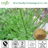 2016 New Arrival Natural Horsetail Extract Powder in bulk