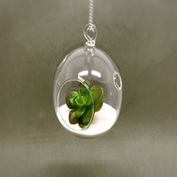 Air Plant Handblown Glass Terrarium Glass