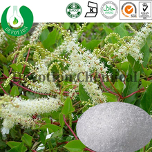 Nature from herb/GMP factory/Japanese Knotweed Extract- Resveratrol trans resveratrol bulk powder 20% 50% 98% 99%