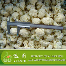 Frozen Cauliflower Floret in 30-50mm Size or Processed as Your Request