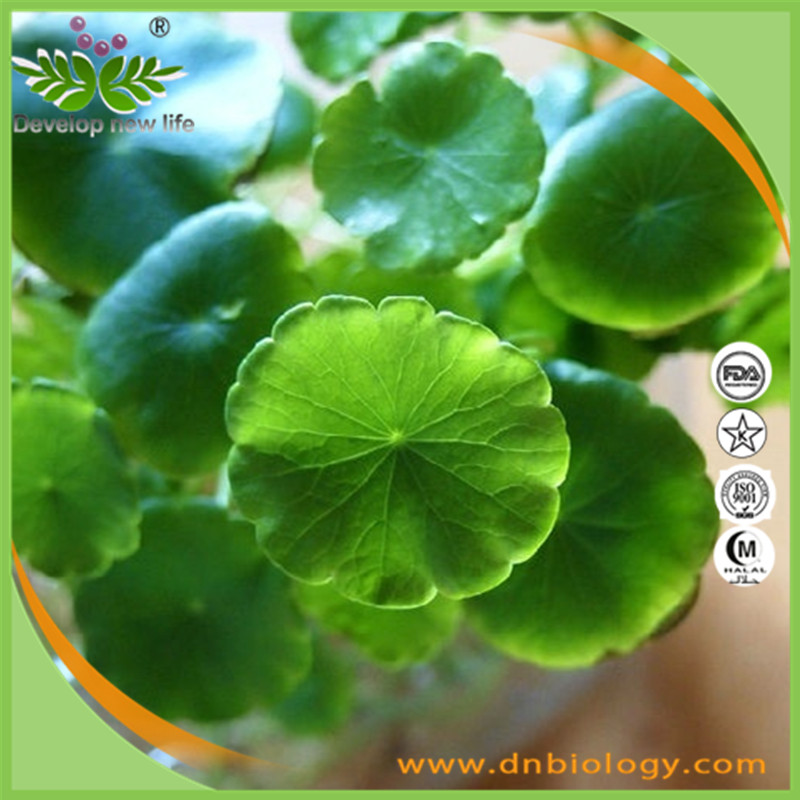 Best service centella asiatica extract powder , gotu kola extract , 10%~95% asiaticoside for Cosmetic