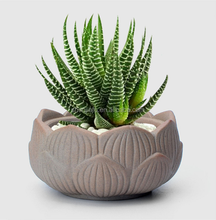 Lotus Shape Mini Succulent Flower Pots