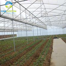 Industrial multi span polytunnel plastic polycarbonate Lowest Price Plastic-film Greenhouse for tomato and flower growth