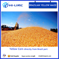 grade 2 animal feed yellow corn dried feed corn for sale