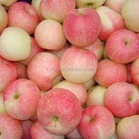 Fresh gala apple sweet juicy gala apple with best price brand Yitian