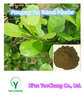 Top quality Natural Yerba mate extract 5:1, Paraguay Tea extract powder, Bulk wholesale Yerba mate extract
