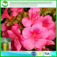 100% natural and high quality azalea plants extract oil for treatment chronic bronchitis