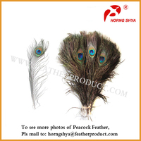 Natural Peacock Feathers for Sale Cheap