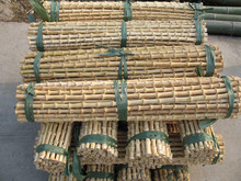 Bamboo Root Sticks, Whangee Canes, Bamboo Root Canes, Bamboo Rhizome