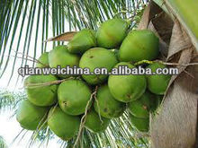 young coconut water processing