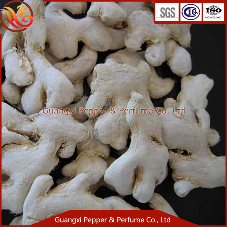 wholesale spices suppliers china ginger exporter