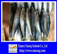 Sales Freezer Scomber Japonicus 6-8 PCS Pacific Mackerel