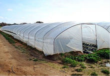Anti-UV Plastic Agricultural film for fruits and vegetables planting