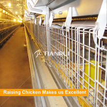 uganda poultry farm used automatic chicks cage for day old chickens