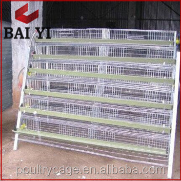 Large Scale Quail Breeding Cage