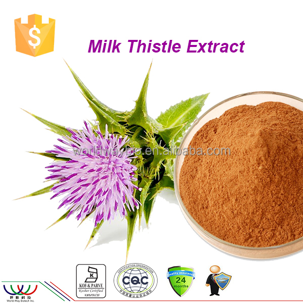 China GMP KOSHER HACCP FDA manufacturer supply free sample 80% silymarin Milk Thistle extract powder