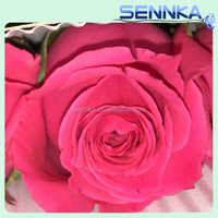 The top quality miss rose fresh cut rose pink with 60-80cm long from yunnan